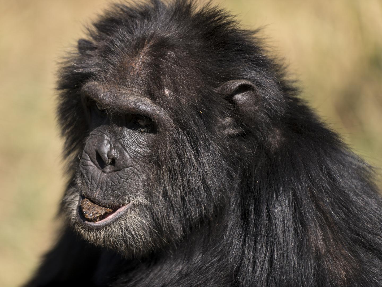 Primaten - Wildlife Moments - Ein Wildlife Spendenprojekt